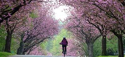 Equinozio di primavera: è il momento di rinascere