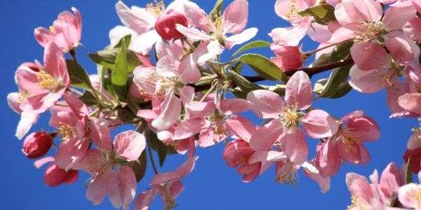 Rinascere a Primavera