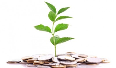 money-plant_shutterstock_35780416
