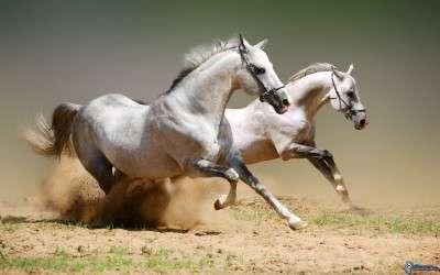 cavalli-bianchi-155941