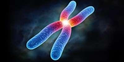 chromosome.600x300jpg