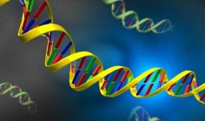 DNA1(1)