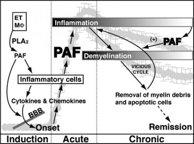 Paff..Platelet.activating.factor