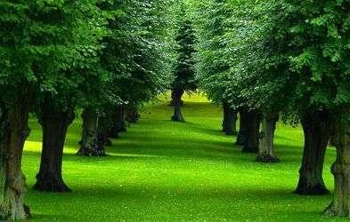 I sensi delle piante - KarmaNews
