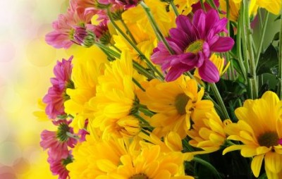 7034658.bunch.pink.yellow.flowers