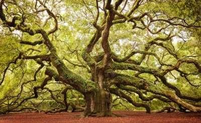 amazing.trees.22