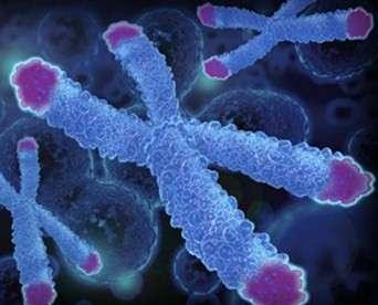 cromosomi-con-telomeri