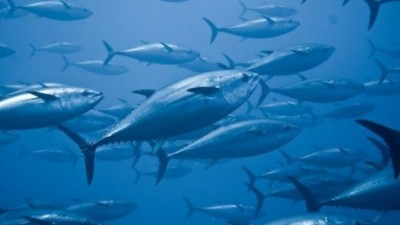maltrattamenti.di.pesci