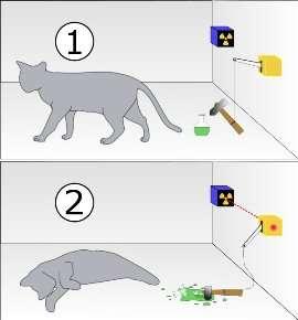 gatto-di-schr