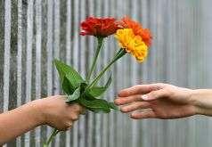 donare-un-fiore
