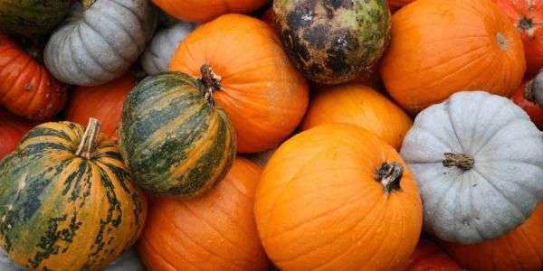 Con la zucca, i colori dell'autunno