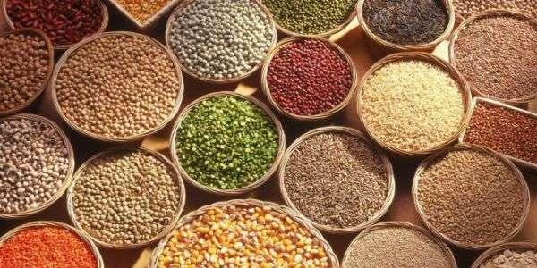 Seeds&Chips: il futuro è servito
