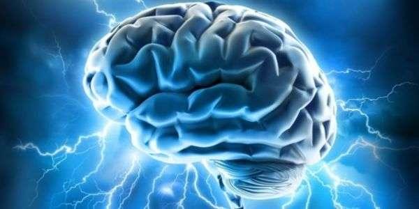 """""""Cervello. Manuale dell'utente"""""""