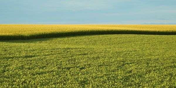 Un appello contro gli OGM