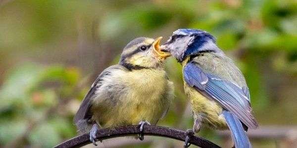 Il nutrimento, un atto d'amore