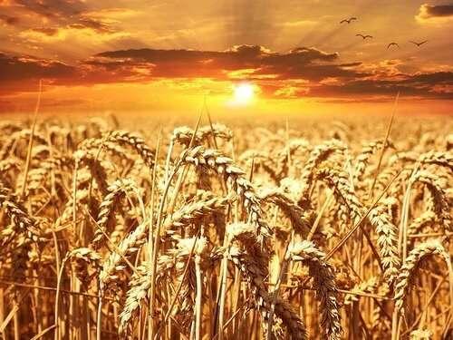 Tecnologia genetica: dalle piante all'uomo
